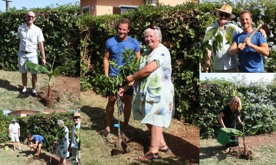 Collage Tree Planting